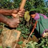 High levels of Papua New Guinean poverty overshadows APEC